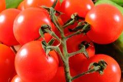 Cherry Tomato Imágenes de archivo libres de regalías