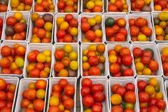 Cherry Tomato Imagens de Stock