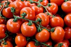 Cherry Tomato Lizenzfreie Stockfotografie