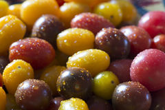 Cherry Tomato Royalty Free Stock Image