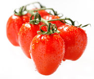 Cherry tomato branch Stock Image