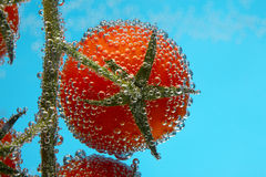 Cherry tomato in bubbles Royalty Free Stock Photos