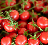Cherry tomato closeup Stock Images