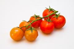 Cherry Tomato con el tronco Imágenes de archivo libres de regalías