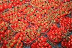 Cherry Tomato on Farmers Market in Catania royalty free stock images