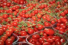 Cherry Tomato on Farmers Market in Catania stock photos