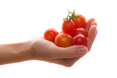 Cherry tomato in hand Stock Images
