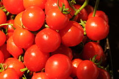 cherry tomato harvest Royalty Free Stock Photography