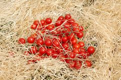 Cherry tomato on the straw Royalty Free Stock Image