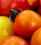 Cherry Tomato. Es - delicious when eaten by themselves as a snack or when added to a salad Royalty Free Stock Photos