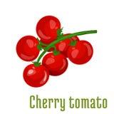 Cherry tomato vegetable icon Royalty Free Stock Images