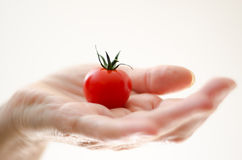 Cherry Tomato in Womans Hand. Some cherry tomato in a womans hand from the side with white background Stock Photo