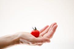 Cherry Tomatoe i den Womans handen Arkivbilder