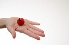 Cherry Tomatoe i den Womans handen Arkivfoto