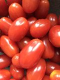 Cherry Tomatoes fotografía de archivo