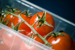 Cherry Tomatoes. A close up shot of fresh cherry tomatoes in a plastic container Royalty Free Stock Photo
