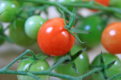 Cherry Tomatoes  Royalty Free Stock Photos