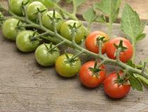 Cherry Tomatoes Stock Photography