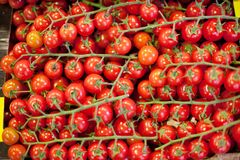 Cherry Tomatoes Stockfoto