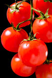 Cherry Tomatoes Royaltyfri Fotografi