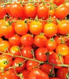 Cherry Tomatoes Photos stock