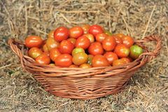 Cherry Tomatoes Photographie stock