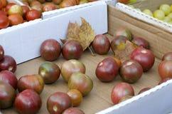 Cherry Tomatoes Photo libre de droits