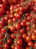 Cherry Tomatoes. On a vine stock photos