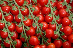 Cherry Tomatoes royalty free stock photography