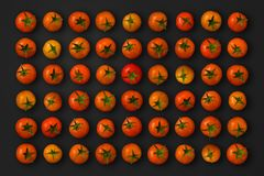Cherry Tomatoes. Isolated and aligned on a grid over a black background with clipping path Stock Image