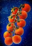 Cherry Tomatoes Immagine Stock