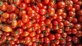 Cherry Tomatoes photo libre de droits