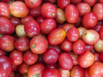 Cherry Tomatoes Stockbild