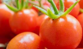 Cherry Tomatoes Stock Afbeeldingen