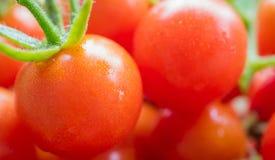 Cherry Tomatoes Stock Fotografie