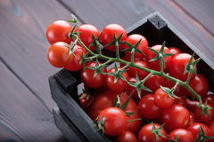 Cherry Tomatoes Lizenzfreie Stockbilder