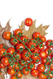 Cherry tomatoes and autumn leaves on a white background Stock Images