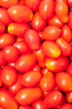 Cherry tomatoes background Royalty Free Stock Image