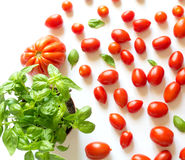 Cherry tomatoes and beef hearts with basil plant Royalty Free Stock Images