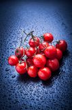 Cherry tomatoes on blue. Cherry tomatoes after rain on blue Royalty Free Stock Image
