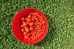 Cherry tomatoes in a bowl Royalty Free Stock Photography