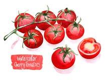 Cherry Tomatoes Branch Fotografía de archivo libre de regalías