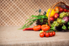 Cherry tomatoes  on the branch. On background organic vegetables. Horizontal Stock Image