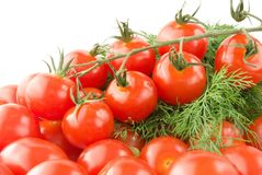 Cherry tomatoes with branch and dill Royalty Free Stock Photography