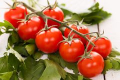 Cherry tomatoes on a branch with parsley Stock Image