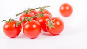 Cherry Tomatoes on Branch   White Royalty Free Stock Images