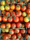 Cherry tomatoes bunches. Fresh red and yellow cherry tomatoes bunches on the market Stock Image