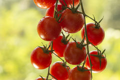 Cherry tomatoes. A bundle of cherry tomatoes Royalty Free Stock Images