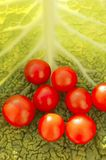 Cherry tomatoes and cabbage leaf Stock Photography