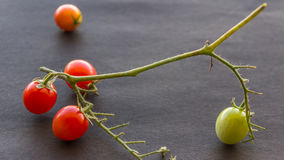 Cherry Tomatoes Close Up Image Photographie stock libre de droits